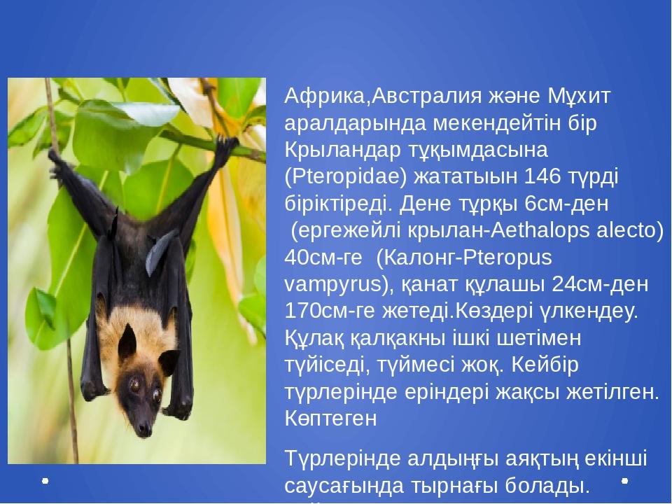 Крыландар отрядтармағы(Megachiroptera) Африка,Австралия және Мұхит аралдарынд...