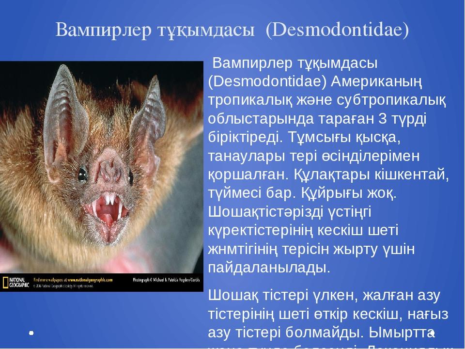 Вампирлер тұқымдасы (Desmodontidae) Вампирлер тұқымдасы (Desmodontidae) Амери...