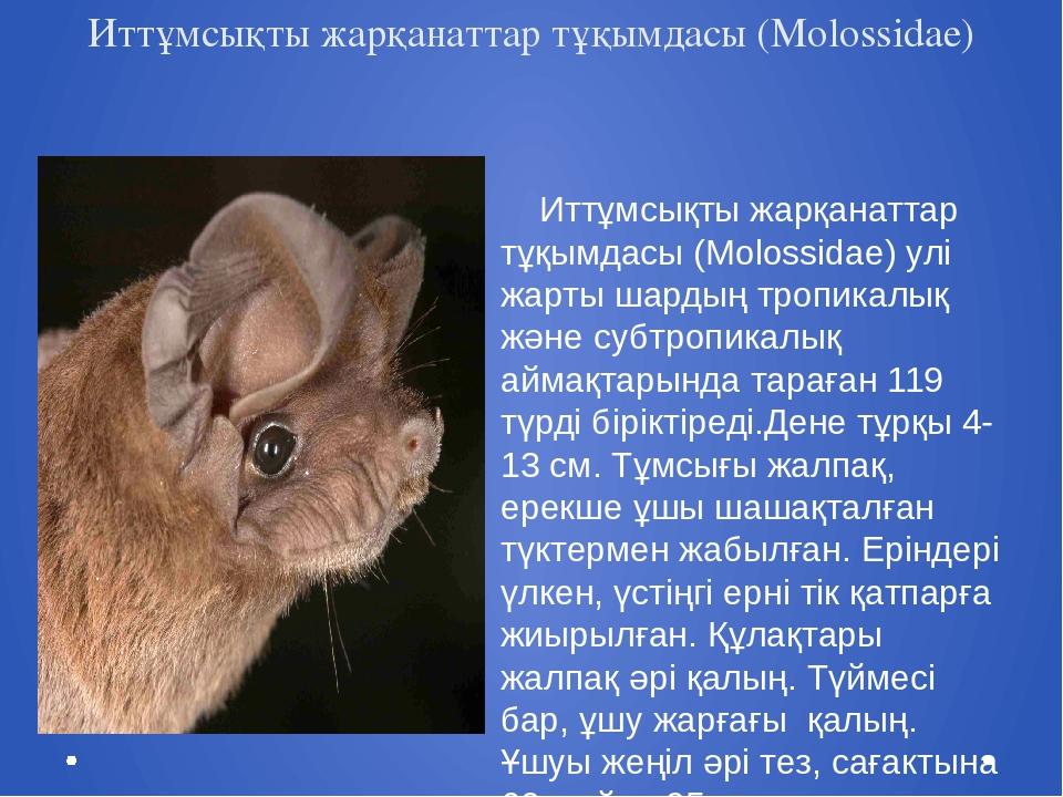 Иттұмсықты жарқанаттар тұқымдасы (Molossidae) Иттұмсықты жарқанаттар тұқымда...