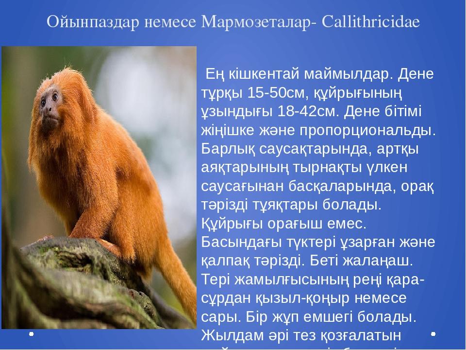 Ойынпаздар немесе Мармозеталар- Callithricidae Ең кішкентай маймылдар. Дене т...