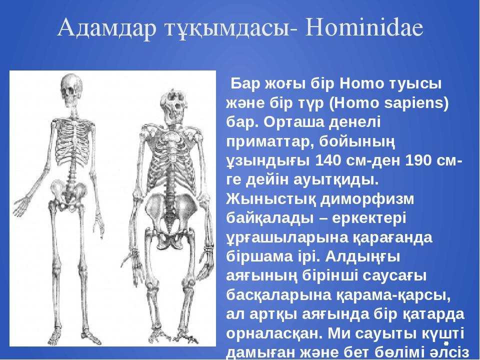 Адамдар тұқымдасы- Hominidae Бар жоғы бір Homo туысы және бір түр (Homo sapie...