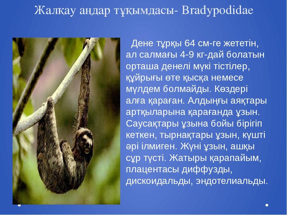 Жалқау аңдар тұқымдасы- Bradypodidae Дене тұрқы 64 см-ге жететін, ал салмағы...