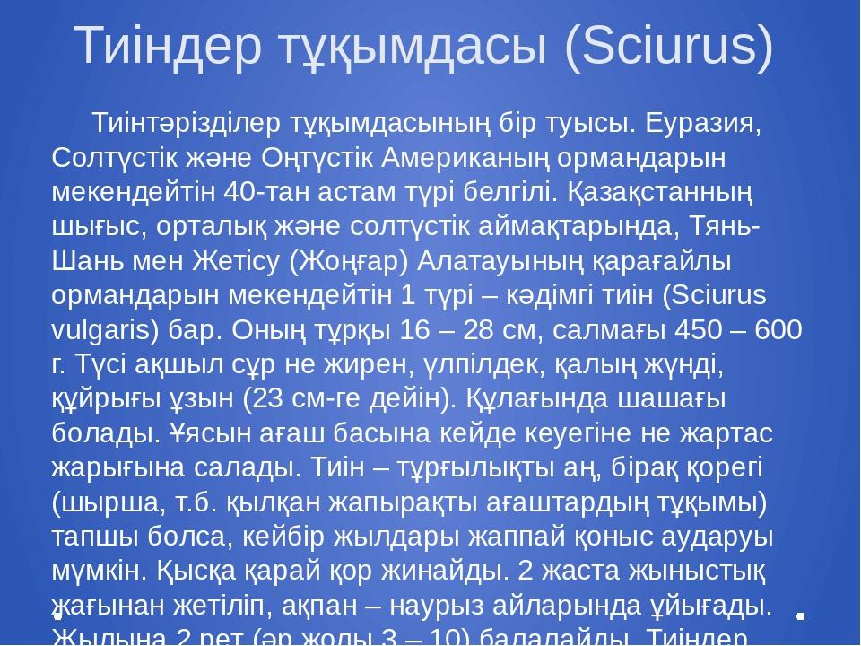 Тиіндер тұқымдасы (Sciurus) Тиінтәрізділер тұқымдасының бір туысы. Еуразия, С...