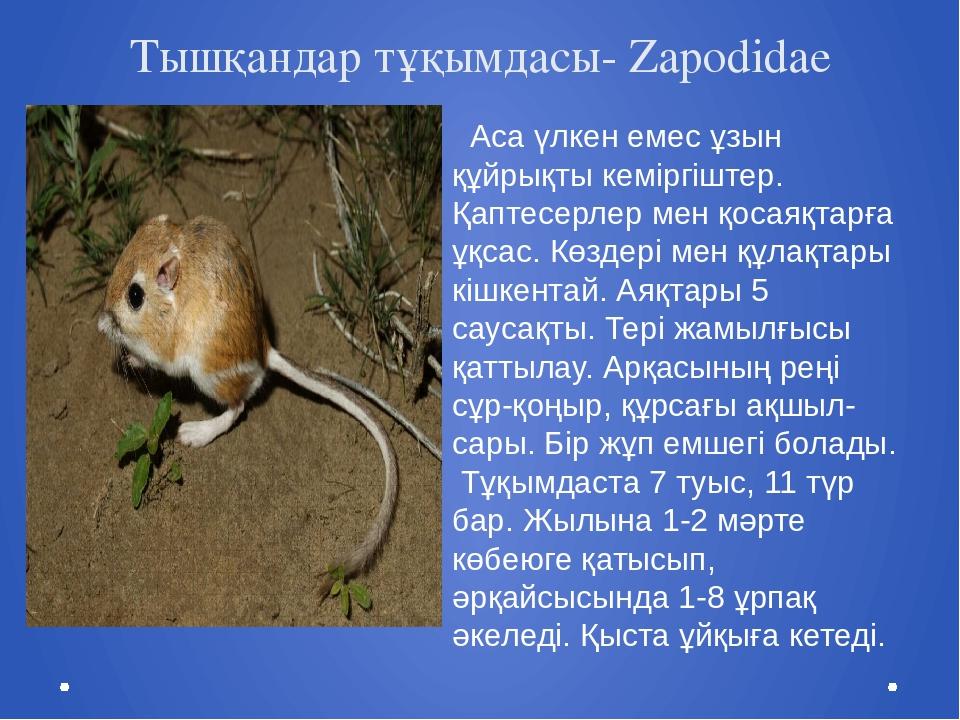 Тышқандар тұқымдасы- Zapodidae Аса үлкен емес ұзын құйрықты кеміргіштер. Қапт...