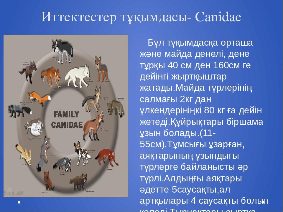 Иттектестер тұқымдасы- Canidae Бұл тұқымдасқа орташа және майда денелі, дене...