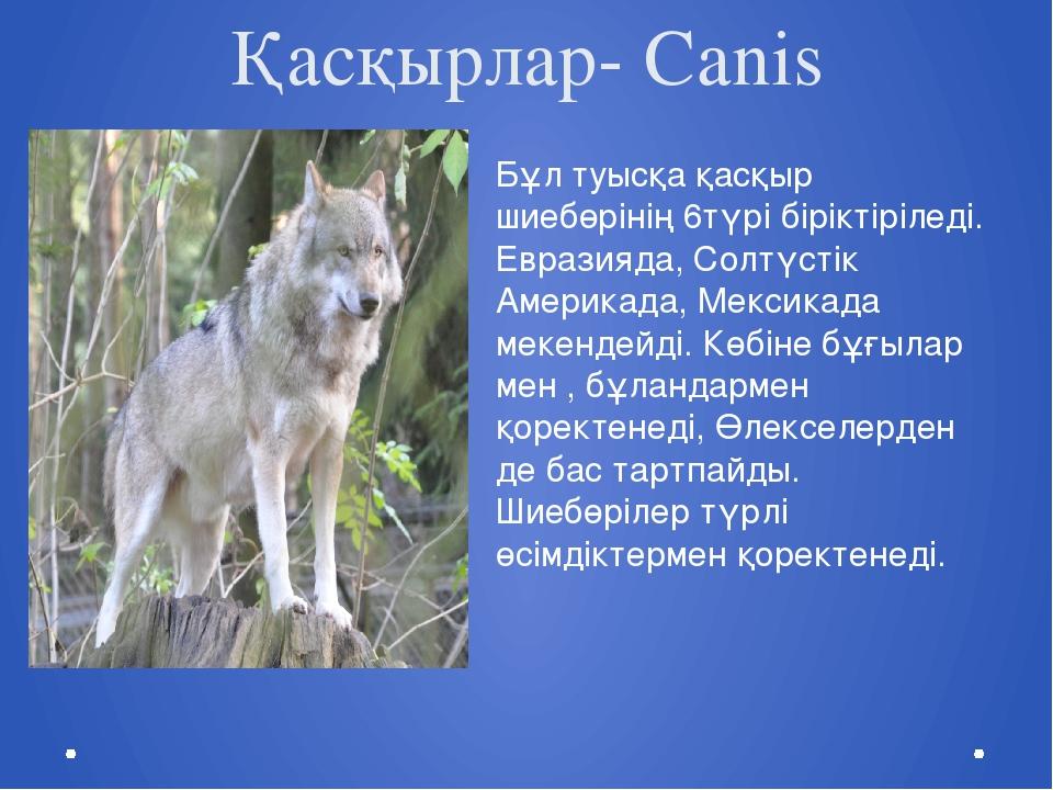 Қасқырлар- Canis Бұл туысқа қасқыр шиебөрінің 6түрі біріктіріледі. Евразияда,...