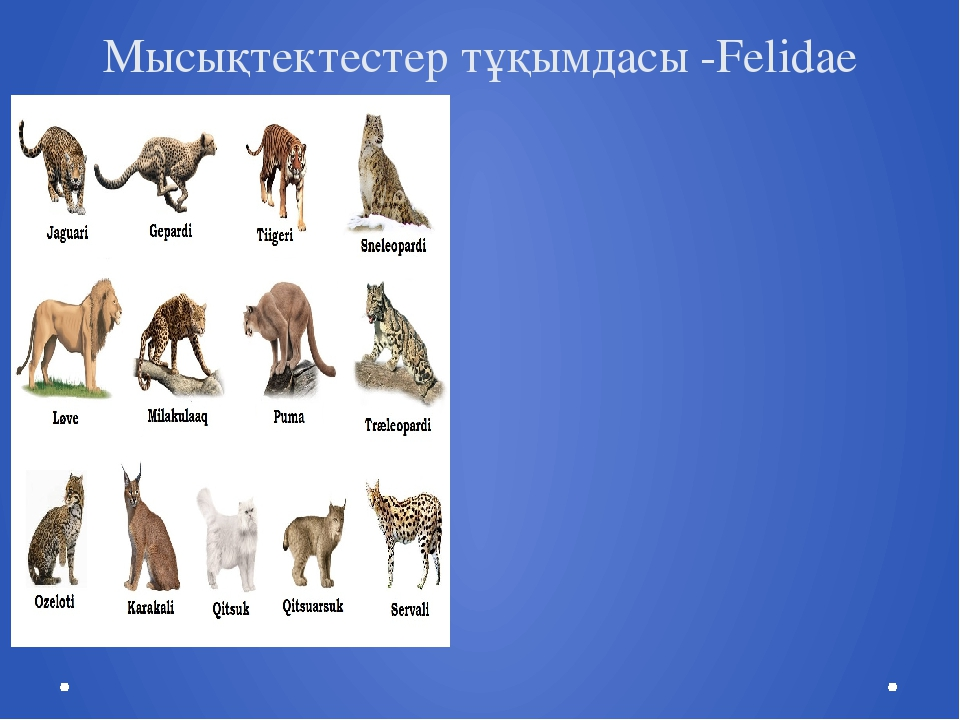 Мысықтектестер тұқымдасы -Felidae
