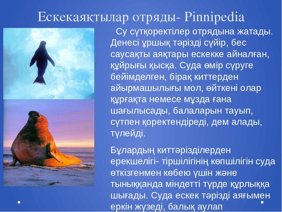Ескекаяқтылар отряды- Pinnipedia Cу сүтқоректілер отрядына жатады. Денесі ұрш...