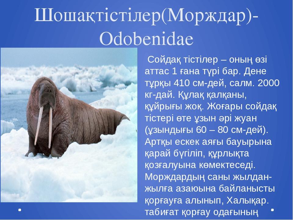 Шошақтістілер(Морждар)- Odobenidae Сойдақ тістілер – оның өзі аттас 1 ғана тү...
