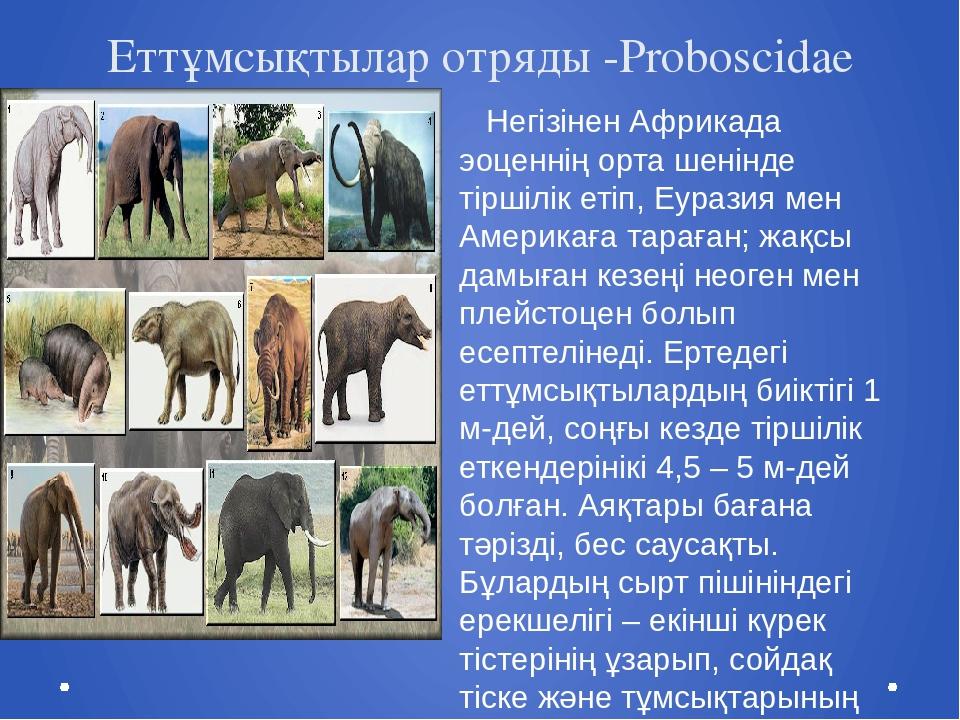 Еттұмсықтылар отряды -Proboscidae Негізінен Африкада эоценнің орта шенінде ті...
