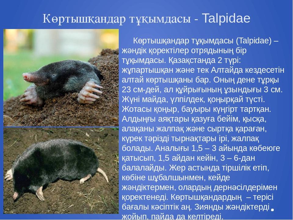 Көртышқандар тұқымдасы - Talpіdae Көртышқандар тұқымдасы (Talpіdae) – жәндік...