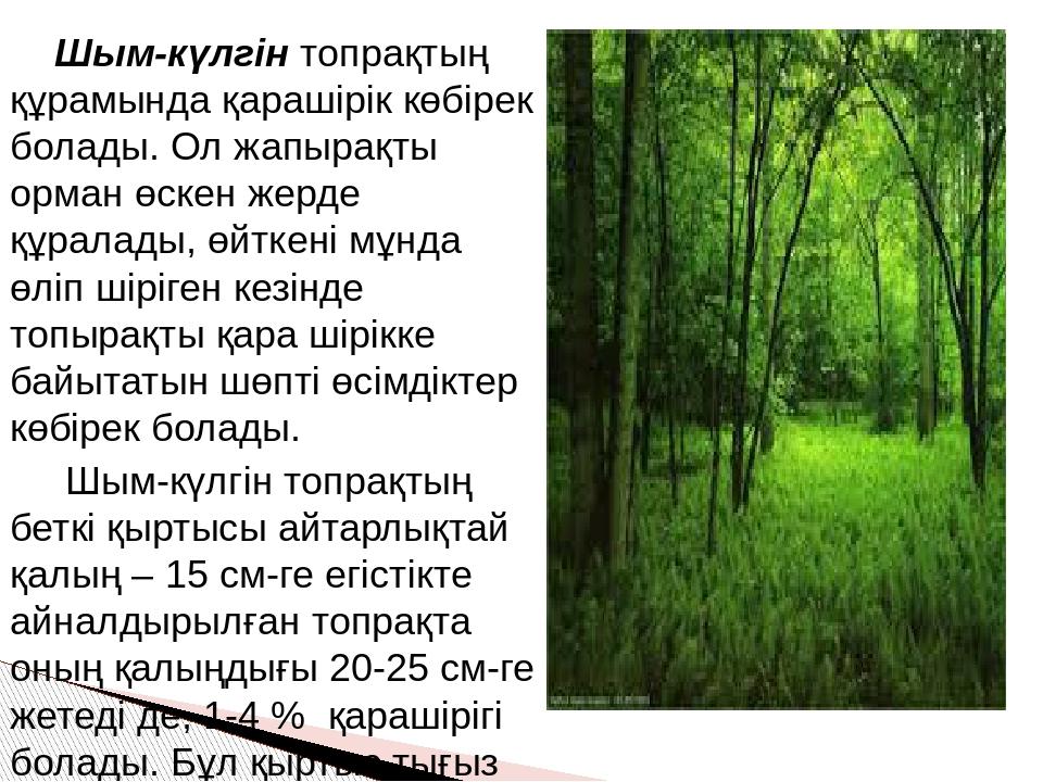 Шым-күлгін топрақтың құрамында қарашірік көбірек болады. Ол жапырақты орман...