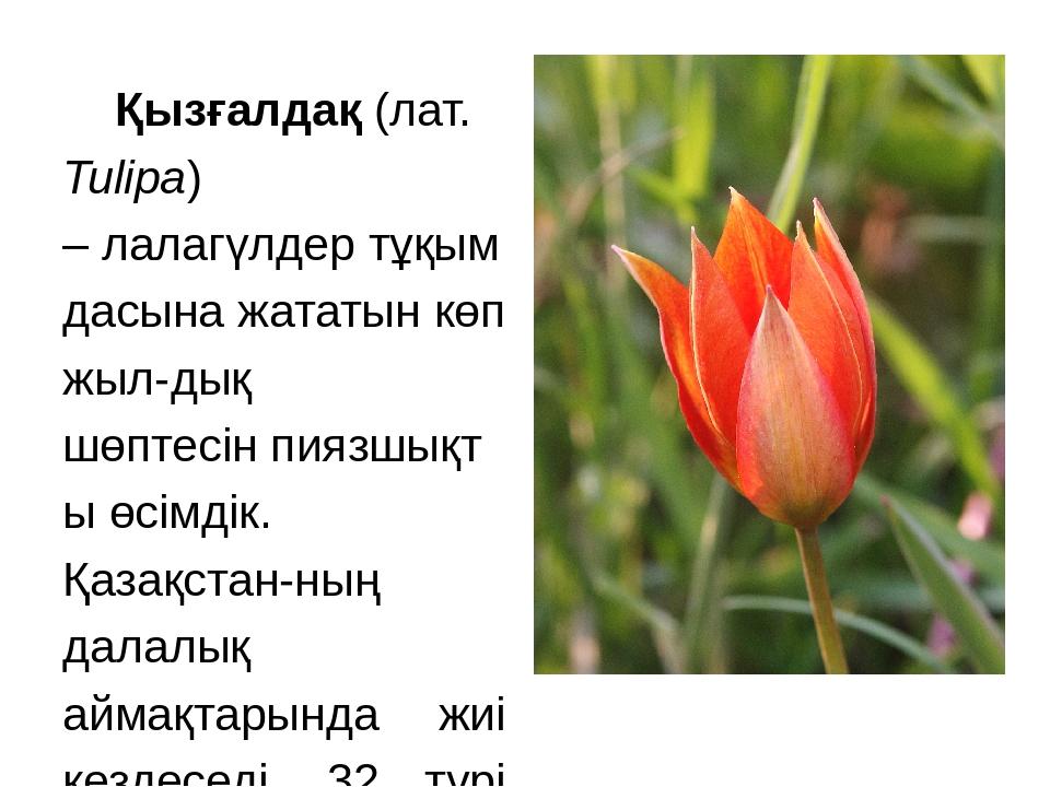 Қызғалдақ(лат. Tulipa) –лалагүлдертұқымдасына жататын көп жыл-дық шөптесін...