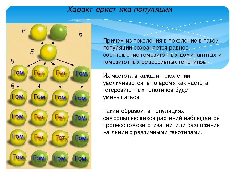 Характеристика популяции Причем из поколения в поколение в такой популяции со...