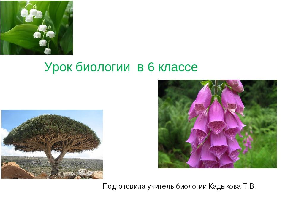 Урок биологии в 6 классе Подготовила учитель биологии Кадыкова Т.В.