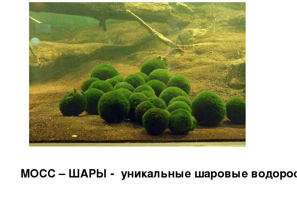 МОСС – ШАРЫ - уникальные шаровые водоросли