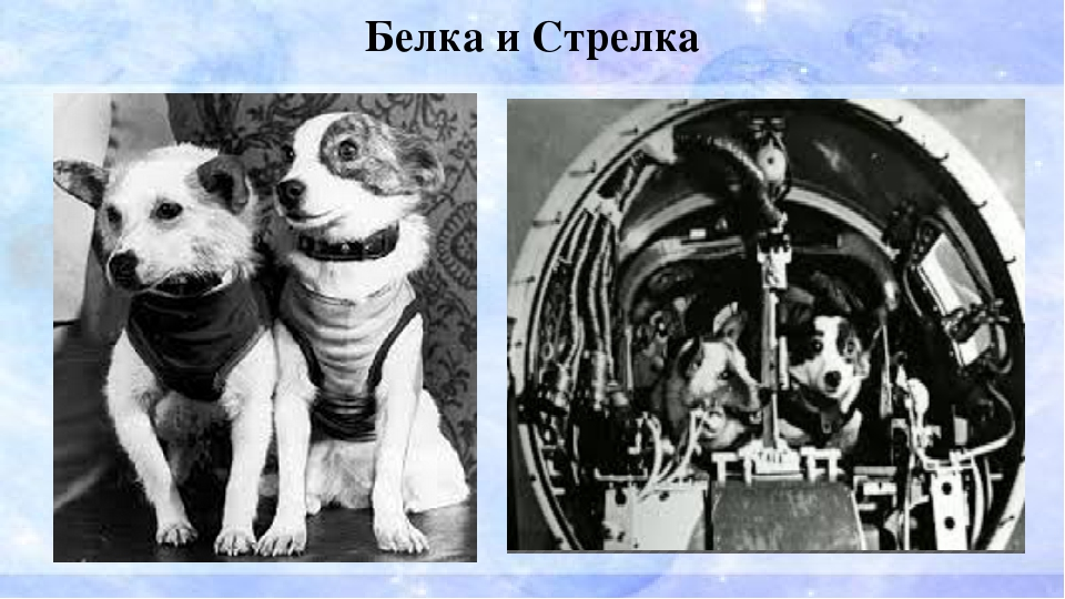 Картинки день космонавтики 12 апреля белка и стрелка