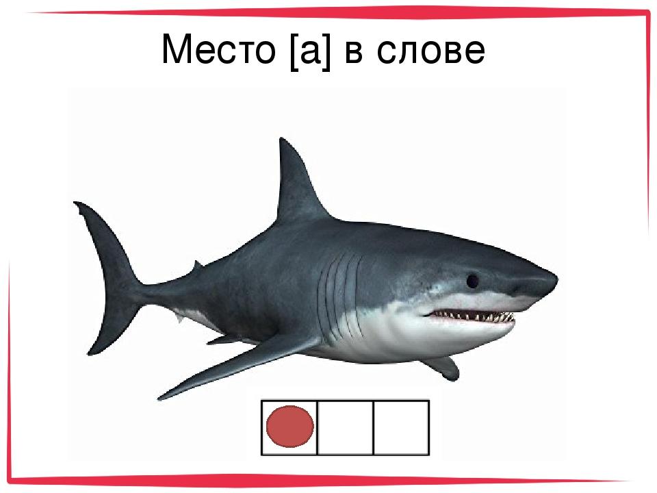 Анимация, картинка с надписью акула