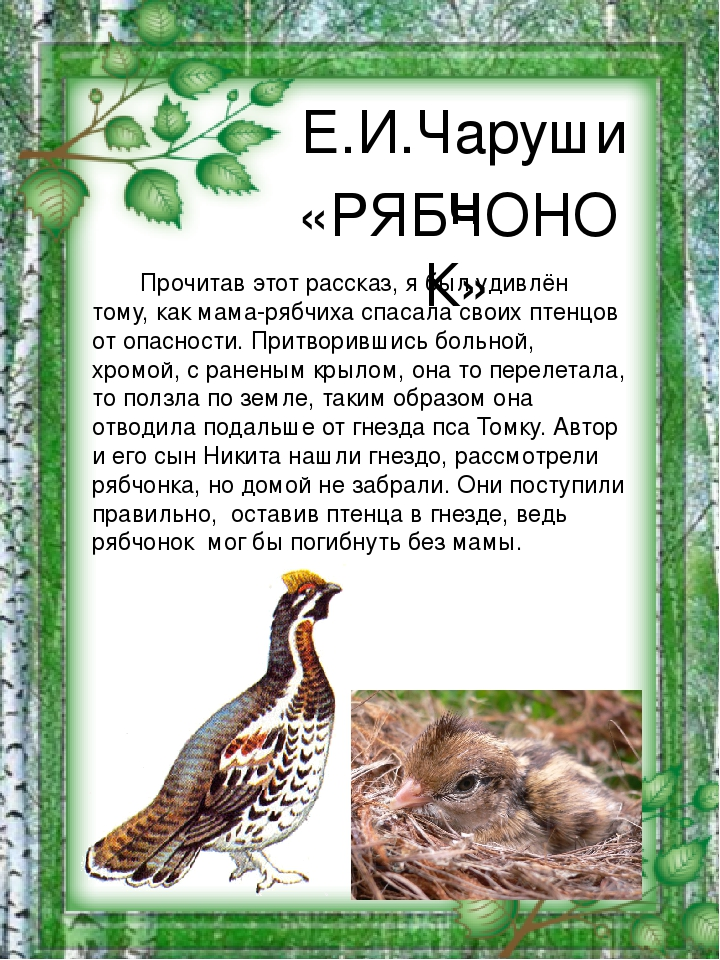 отзыв в читательский дневник чарушин