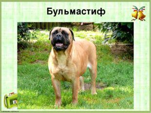 Бульмастиф FokinaLida.75@mail.ru