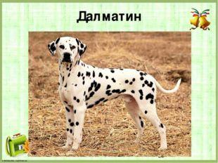 Далматин FokinaLida.75@mail.ru