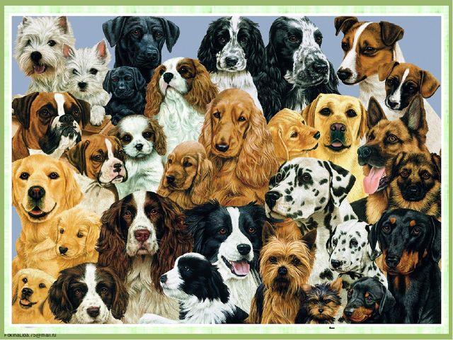 Из Большой Советской Энциклопедии Эти млекопитающие распространены по всему...