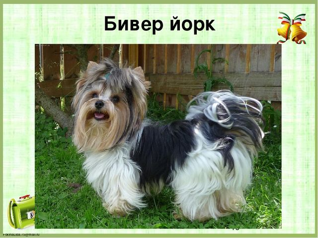 Бивер йорк FokinaLida.75@mail.ru