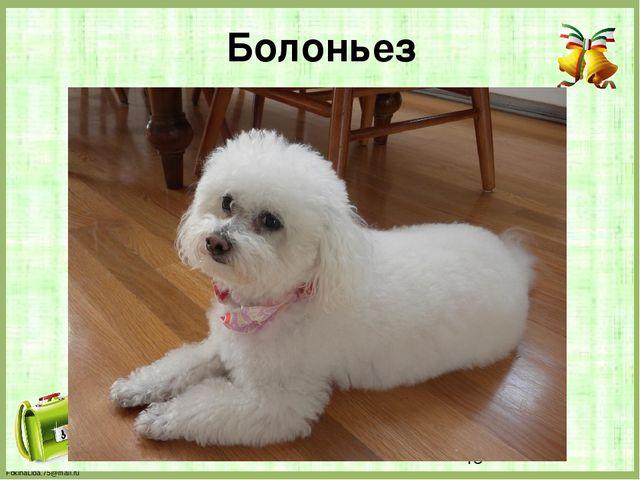 Болоньез FokinaLida.75@mail.ru