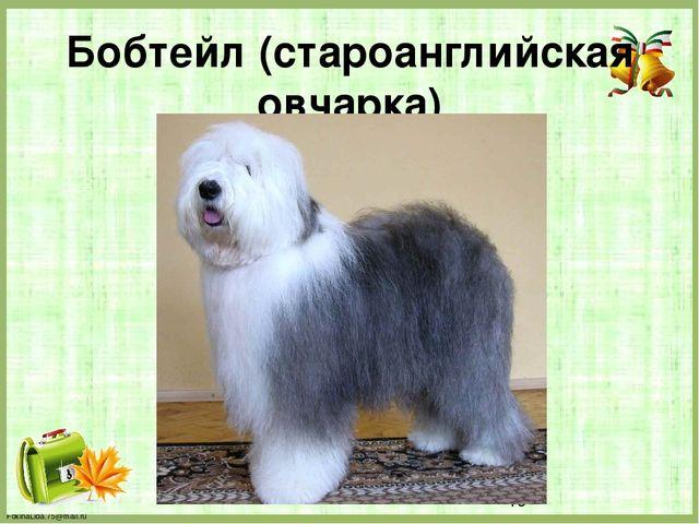 Бобтейл (староанглийская овчарка) FokinaLida.75@mail.ru