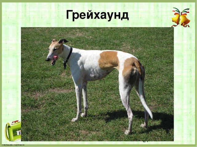 Грейхаунд FokinaLida.75@mail.ru