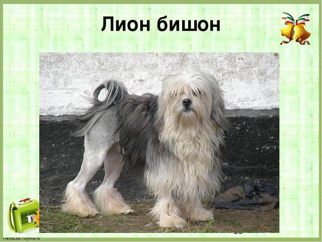 Лион бишон FokinaLida.75@mail.ru