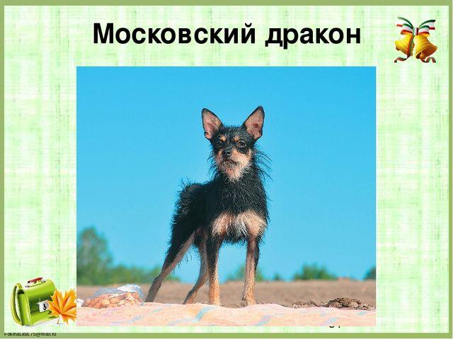 Московский дракон FokinaLida.75@mail.ru