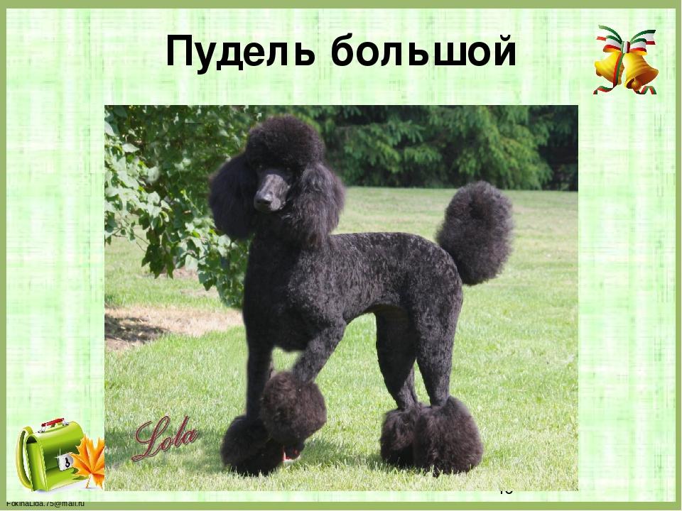 Пудель большой FokinaLida.75@mail.ru