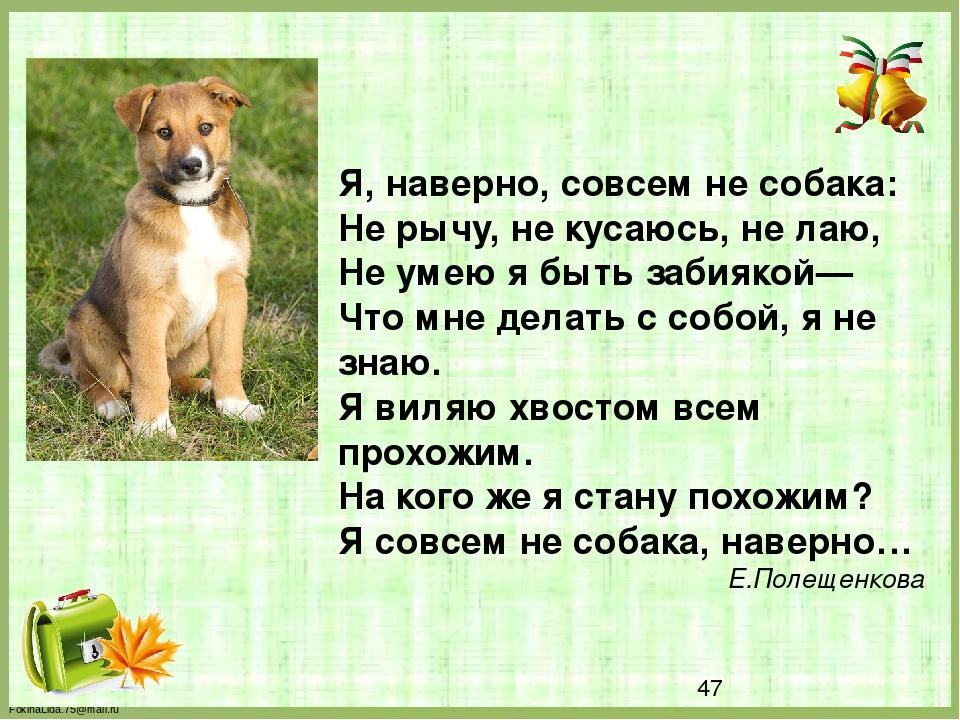 Я, наверно, совсем не собака: Не рычу, не кусаюсь, не лаю, Не умею я быть за...