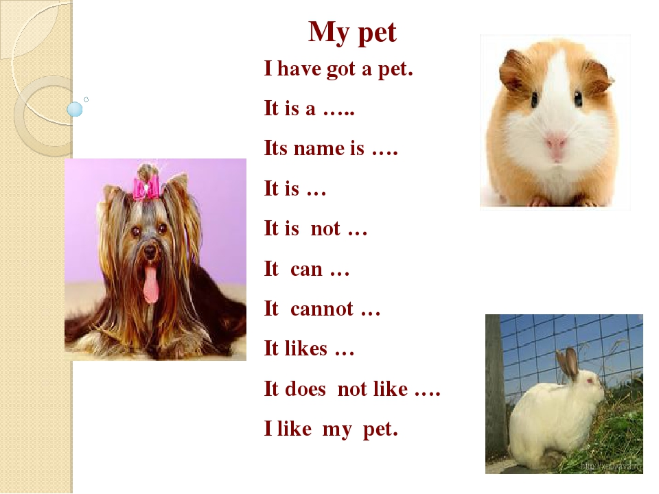 my pet cat essay for kids Here is your paragraph on my pet parrot  pets could be any kind of animal or bird some people prefer to have cats and dogs, while others prefer to have birds.