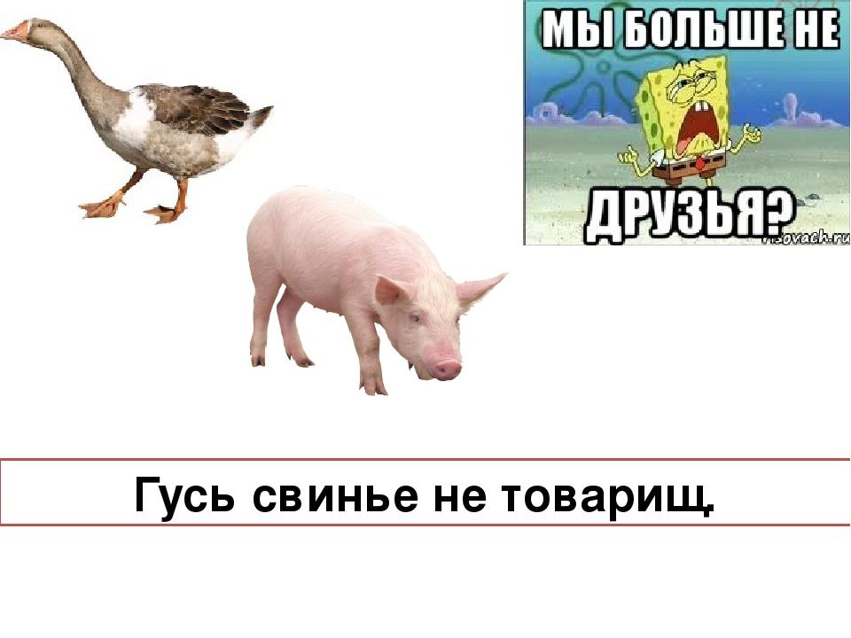 отводятся картинка к пословице гусь свинье не товарищ суд ходатайством