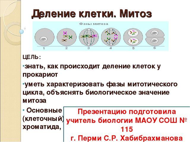 Доклад по биологии на тему деление клеток 9276