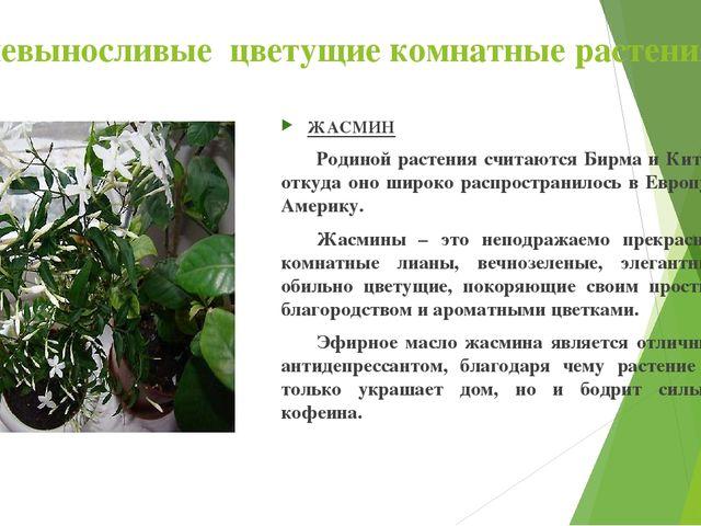 Теневыносливые цветущие комнатные растения ЖАСМИН Родиной растения считаютс...