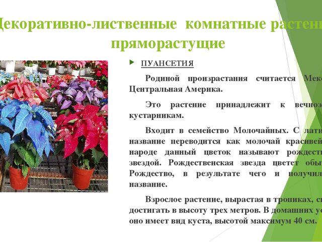 Декоративно-лиственные комнатные растения : пряморастущие ПУАНСЕТИЯ Родиной...