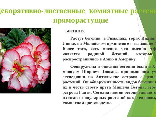 Декоративно-лиственные комнатные растения : пряморастущие БЕГОНИЯ Растут бег...