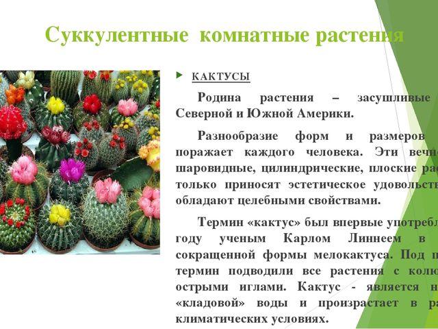 Суккулентные комнатные растения КАКТУСЫ Родина растения – засушливые районы...