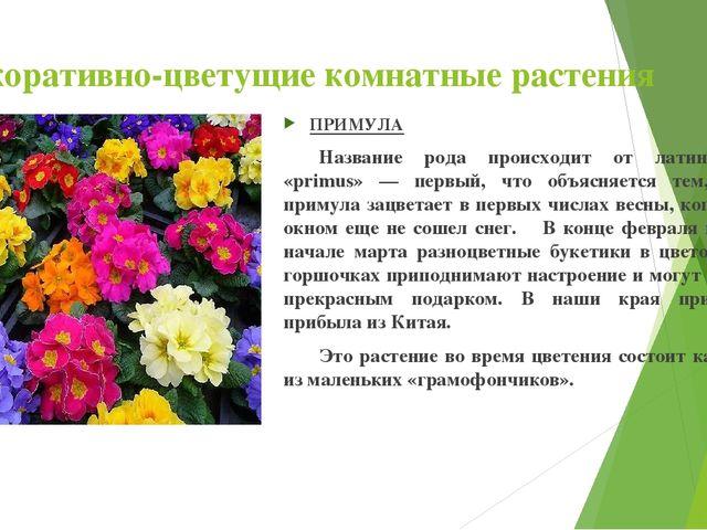 Декоративно-цветущие комнатные растения ПРИМУЛА Название рода происходит от...