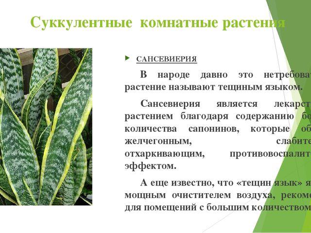 Суккулентные комнатные растения САНСЕВИЕРИЯ В народе давно это нетребователь...