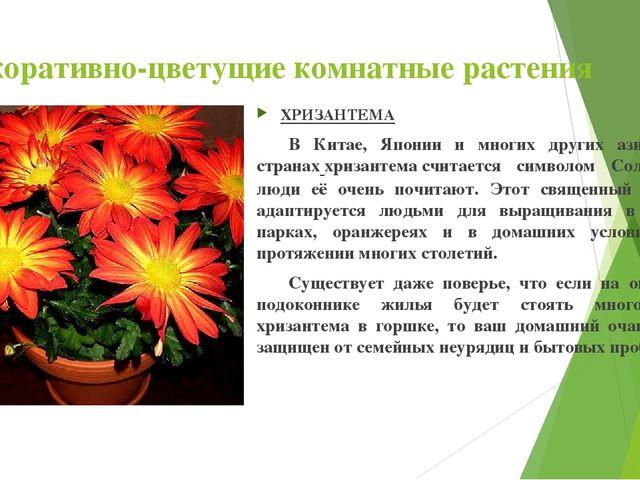 Декоративно-цветущие комнатные растения ХРИЗАНТЕМА В Китае, Японии и многих...