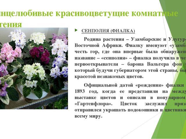 Солнцелюбивые красивоцветущие комнатные растения СЕНПОЛИЯ (ФИАЛКА) Родина ра...