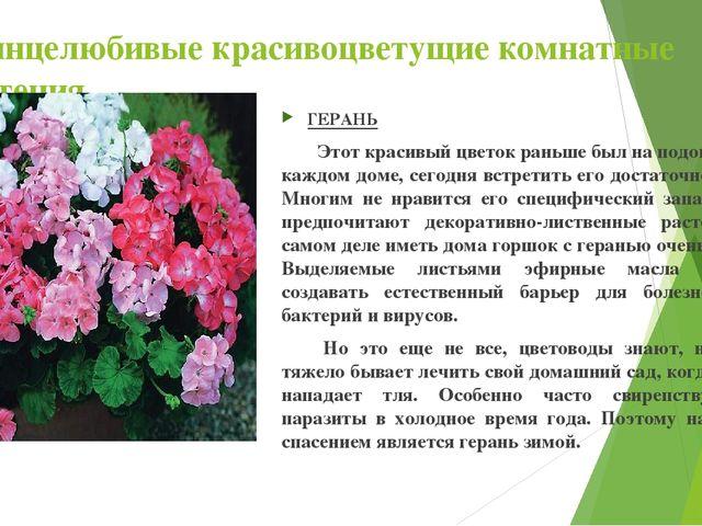 Солнцелюбивые красивоцветущие комнатные растения ГЕРАНЬ Этот красивый цветок...