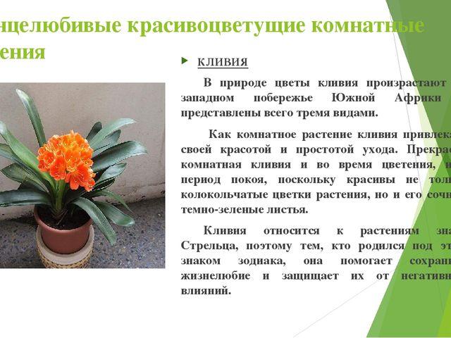 Солнцелюбивые красивоцветущие комнатные растения КЛИВИЯ В природе цветы клив...