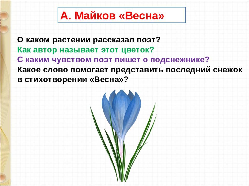 А. Майков «Весна» О каком растении рассказал поэт? Как автор называет этот ц...