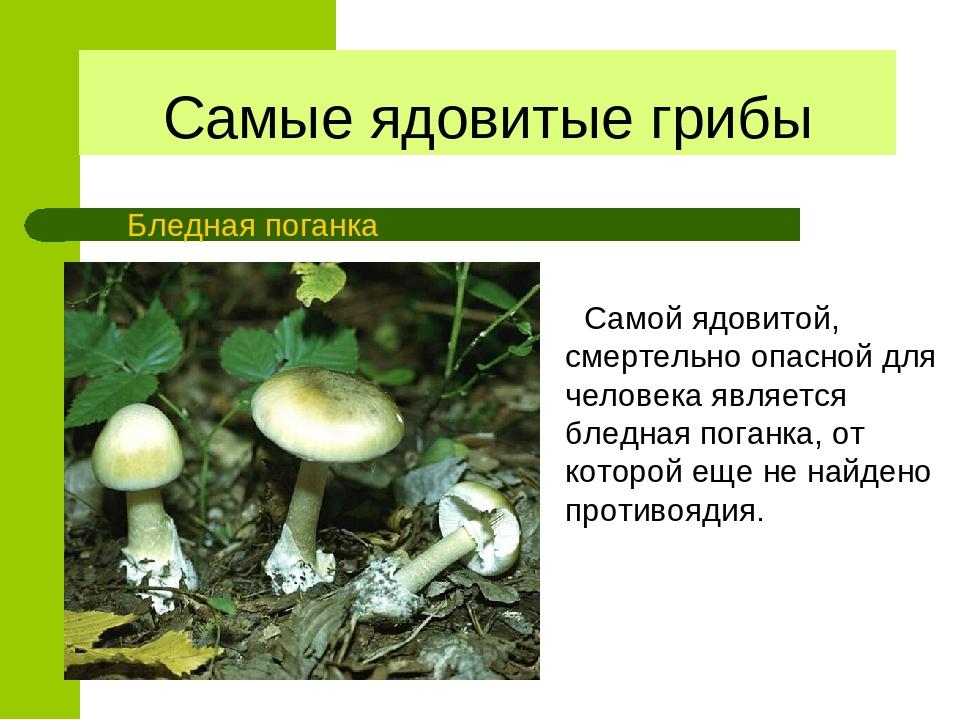 ядовитые грибы и ягоды фото и описание лес