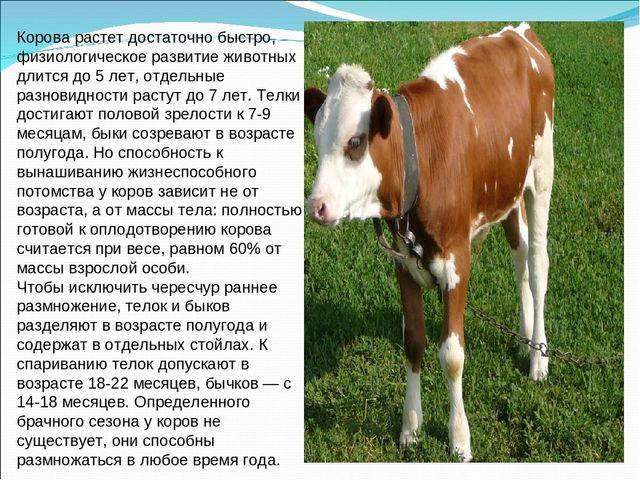 Ведешь в дом корову или барана — предвещает радость.